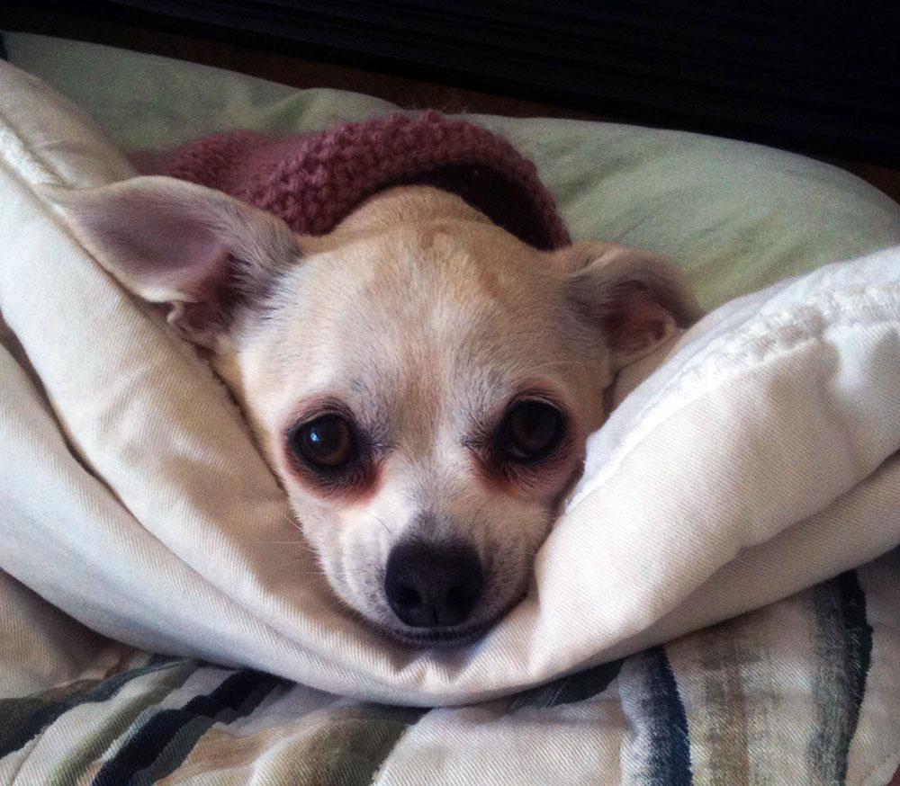 Our Little Dog Peanut